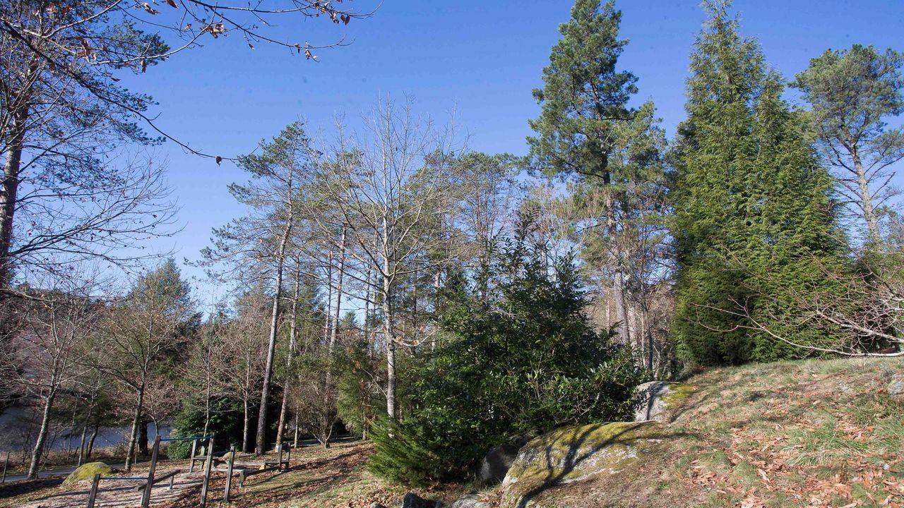La presencia del eucalpto es habitual en bastantes comarcas de Galicia