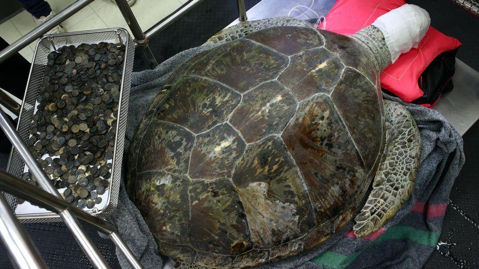 El vídeo con el que Mel motivó a los jugadores.Omsi, una tortuga hembra de 25 años, se recupera tras ser intervenida en la Facultad de Veterinaria de la Facultad de Bangkok, donde le extrajeron decenas de monedas que alojaba en su estómago
