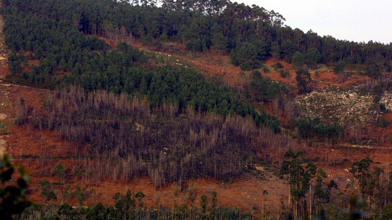 Así es la planta de biomasa Greenalia.Daños causados por el goníptero en un monte de Pontevedra, en una imagen de archivo