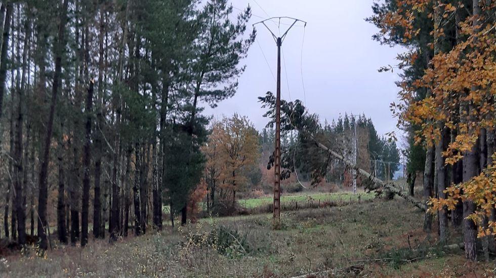 Un pino caído sobre un tendido eléctrico entre Abrence y A Frieira, en A Pobra do Brollón