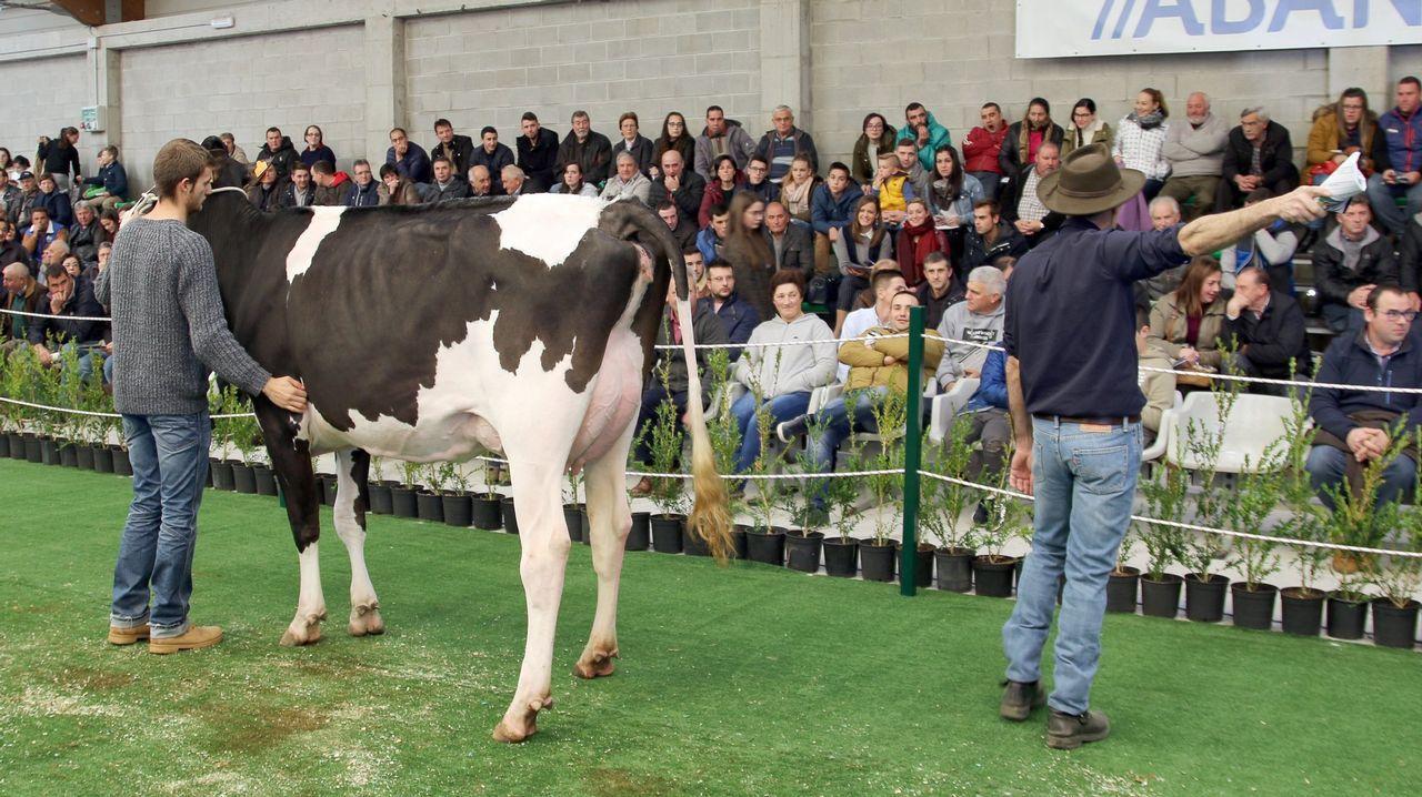 ¡Mira aquí las imágenes de la subasta de vacas de la Semana Gandeira de Mazaricos!.Las granjas gallegas realizaron importantes inversiones para el bienestar de las vacas