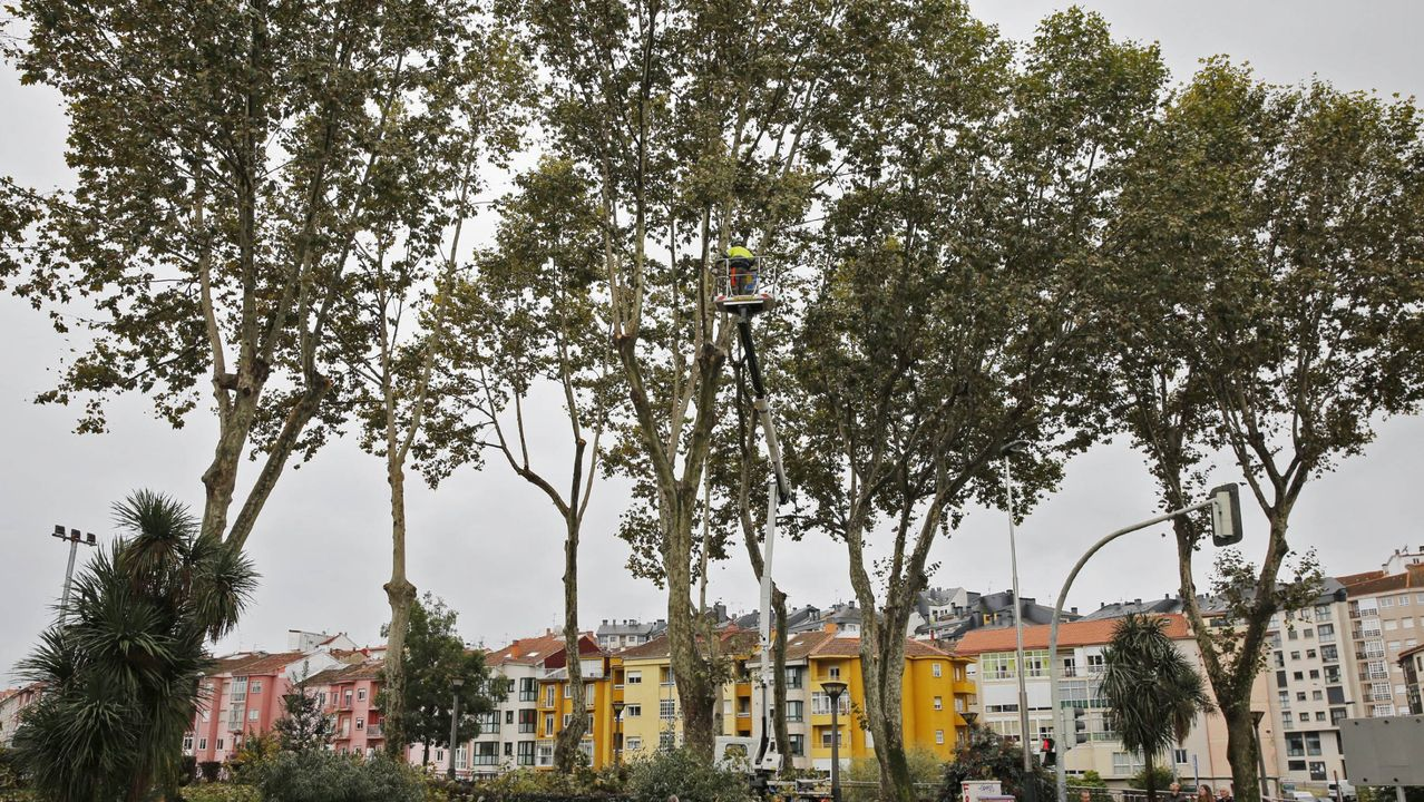 La reunión de los colectivos vecinales y sociales de la zona oeste, ayer, en Jove. Contaminación. Gijón.Algunos de los cebos recogidos por los propietarios de los animales
