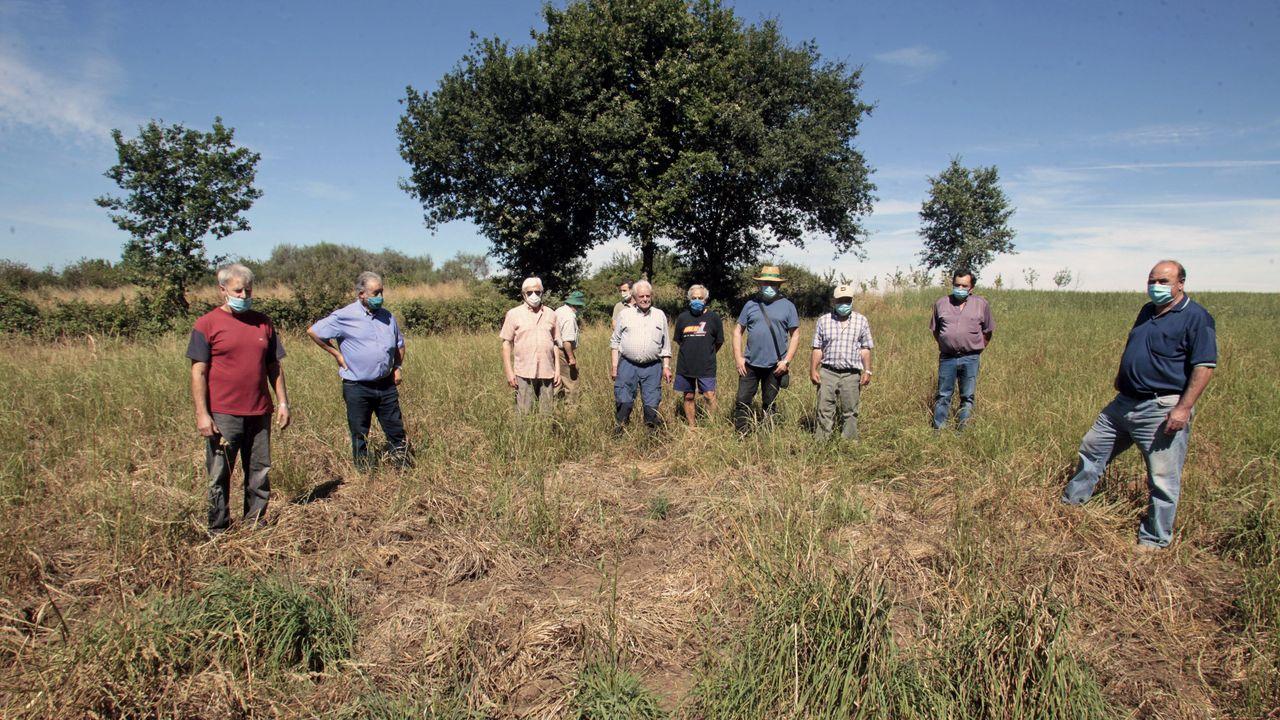 Luis López (primero por la izquierda) y otros vecinos de Piño en un pastizal destrozado por jabalíes