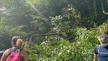 La ruta del Alba cortada con árboles