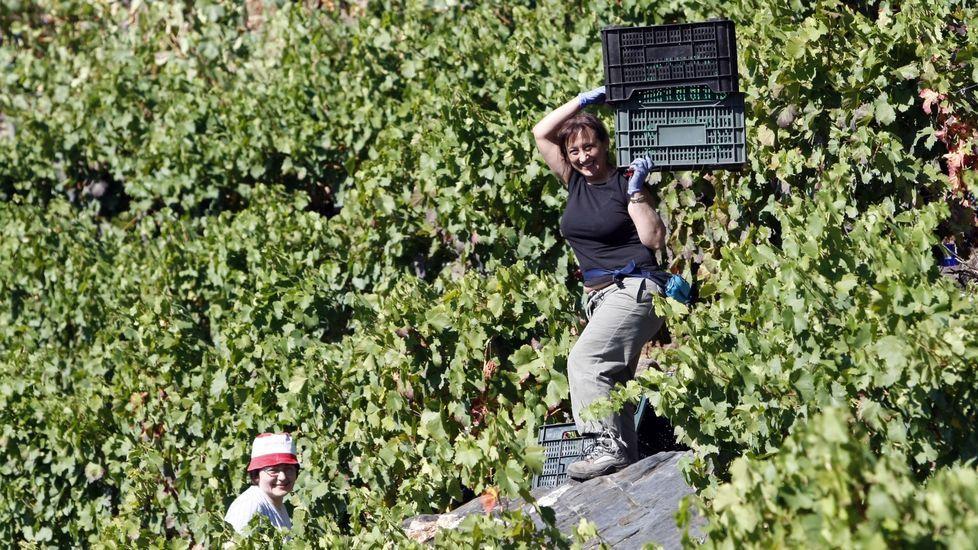 Dos mujeres en la vendimia en una viña de Doade, en una fotografía de archivo