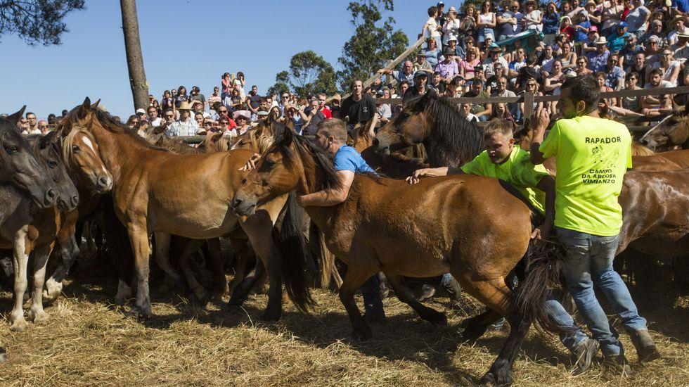 Bravura y libertad en Vimianzo: los caballos bajan del Monte Faro para la Rapa: ¡álbum!