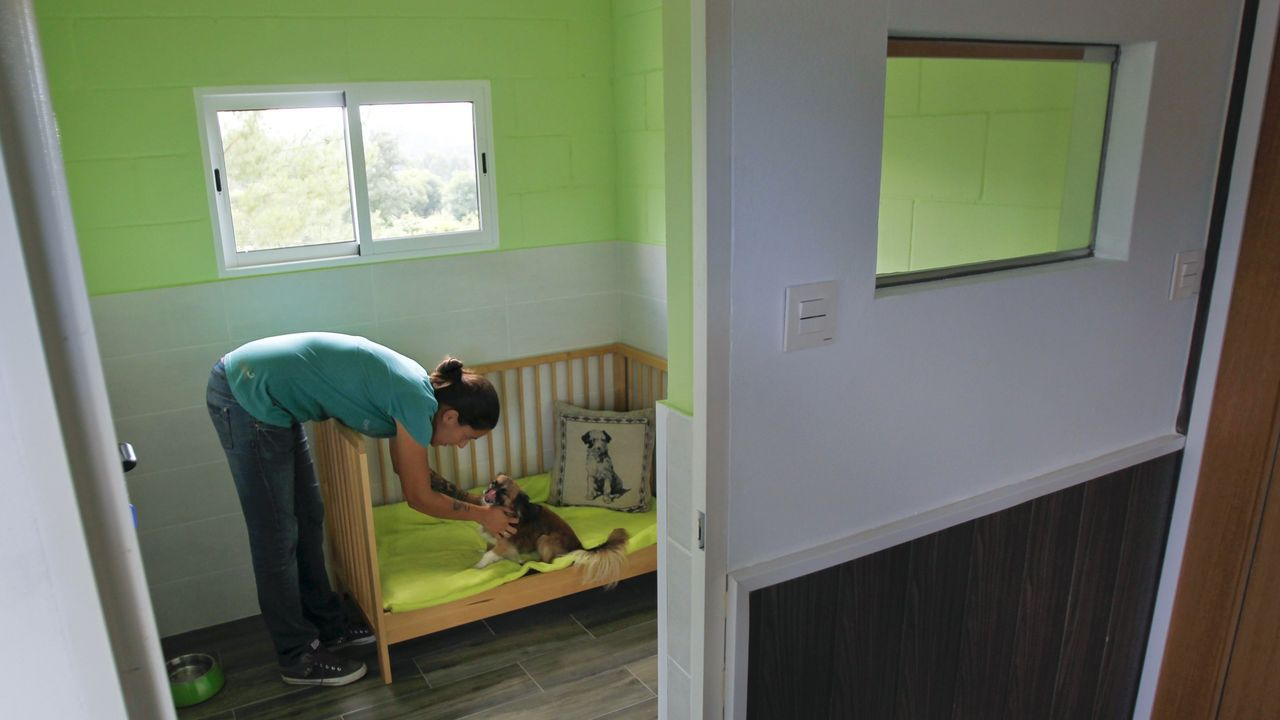 La residencia canina y felina El Bosque de Narón ampliará sus instalaciones, pasando de 280 a 800 metros cuadrados
