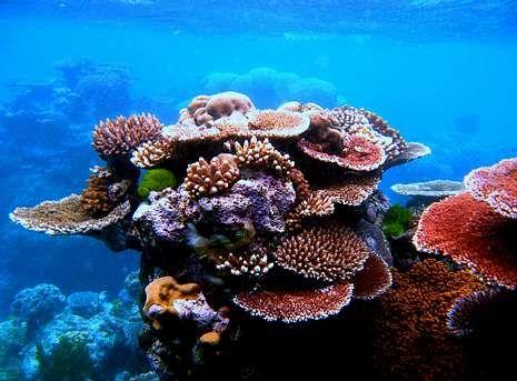 La barrera de coral se extiende a lo largo de 3.000 kilómetros.