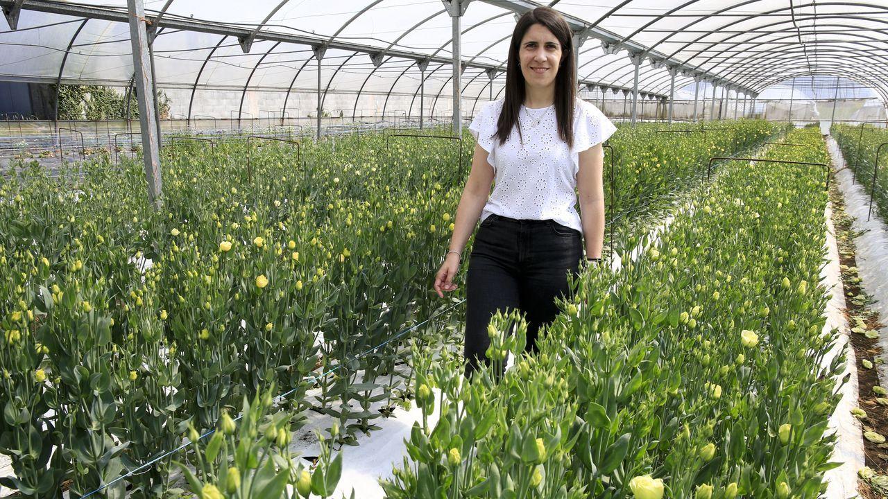 Teixido Flor distribuye su producción a más de un centenar de floristerías