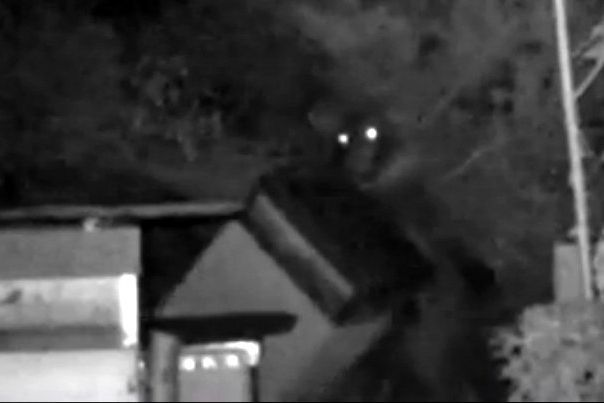 Captura del vídeo grabado en Seceda con un oso atacando una colmena