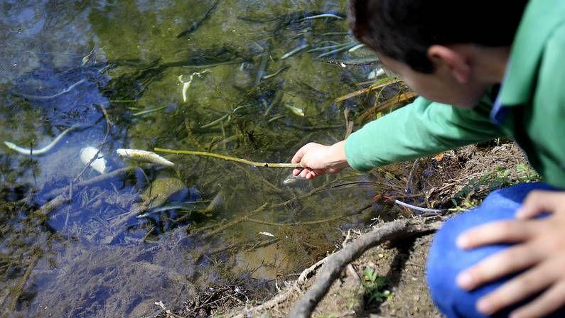 Proyecto para Balaídos.Miles de peces aparecieron muertos el pasado marzo. <span lang= es-es >óscar vázquez</span>