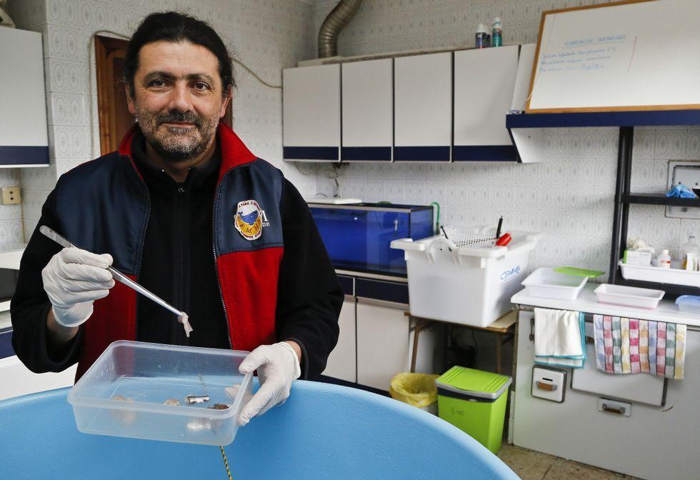 Ballena muerta en Redondela.Alfredo López es uno de los fundadores de Cemma, que dirigió hasta el año 2011.