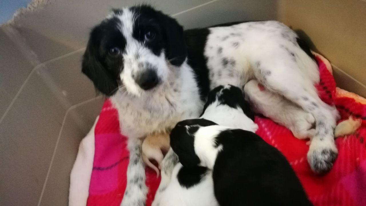 «Fariña», la perra que el Día de la Madre mostró ser una madraza