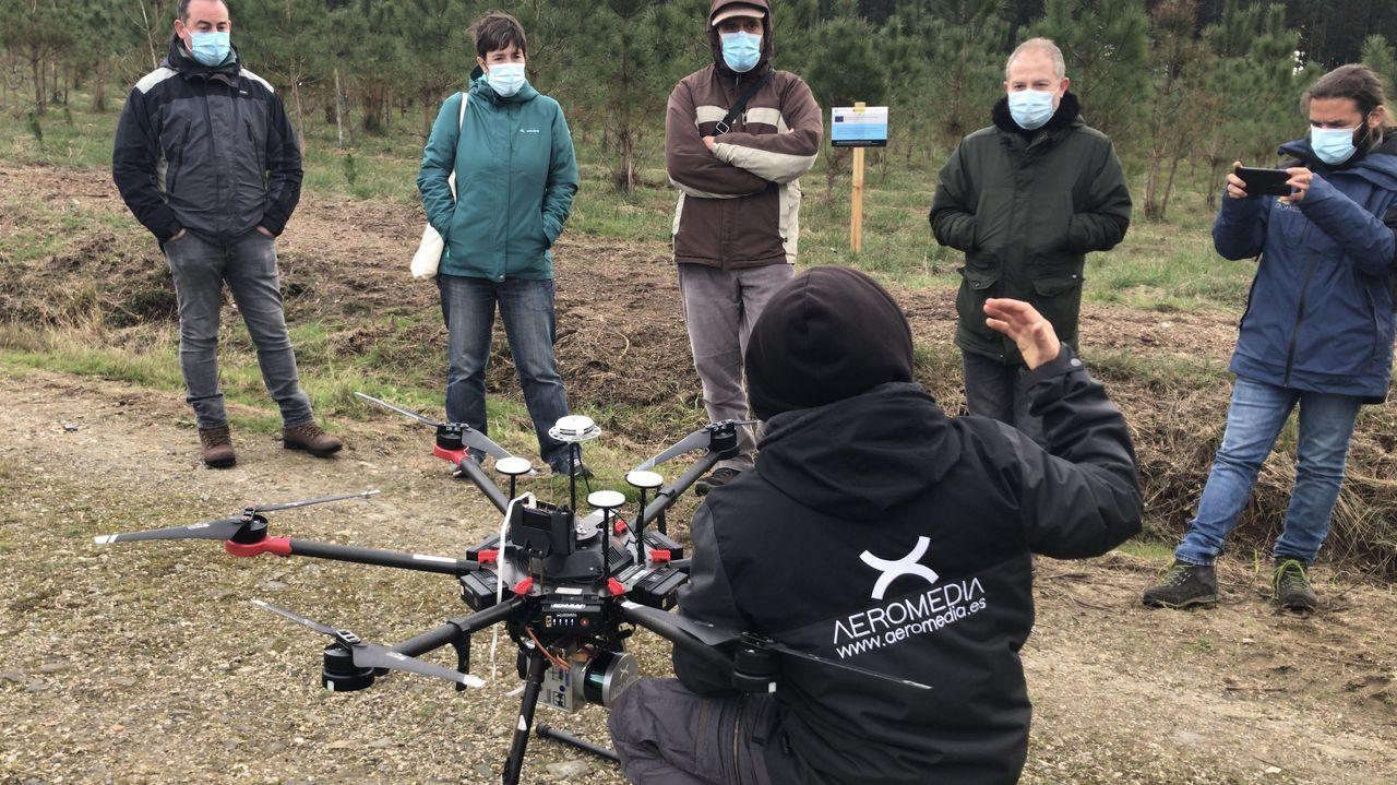 Técnicos de Lourizán usan un dron en una plantación experimental con planta mejorada de pino