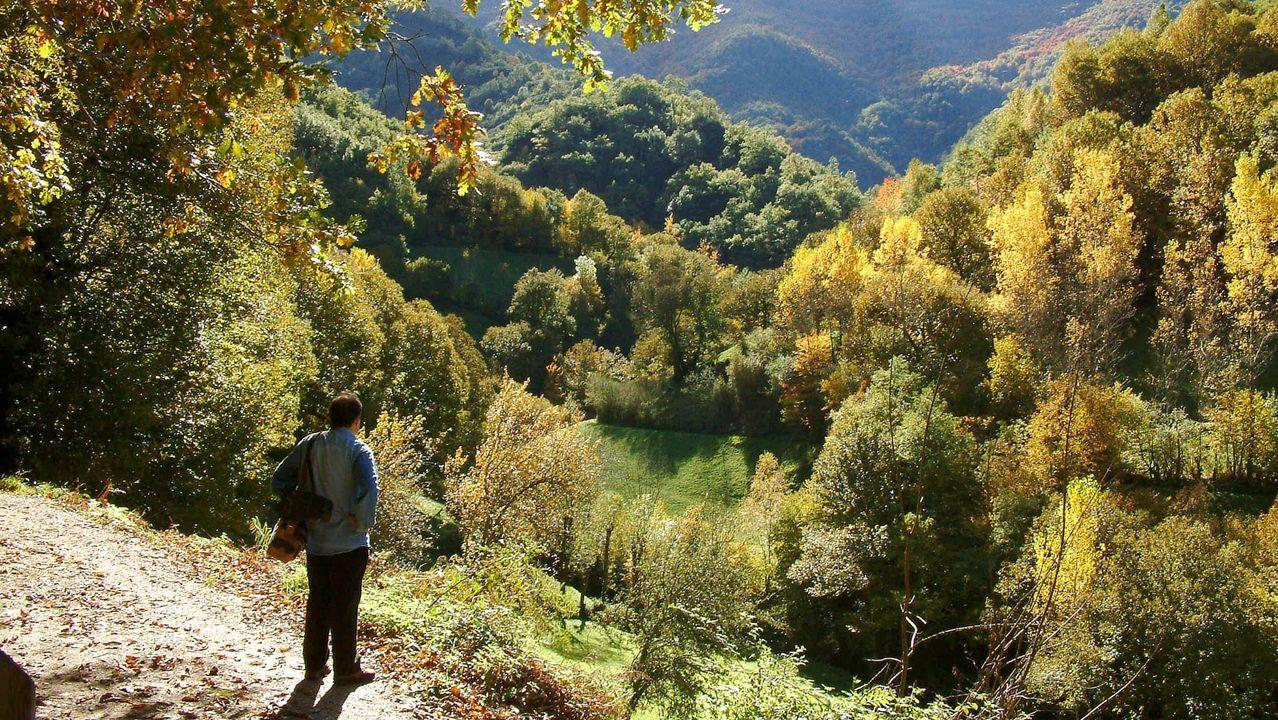 El bosque de la Devesa da Rogueira, perteneciente a la comunidad de montes de Moreda, es una de las tres zonas de la sierra de O Courel que se incluirán en el registro de Medio Rural