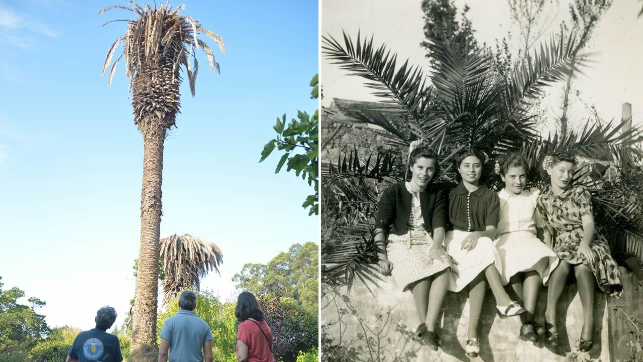 A la izquierda, la palmera de entre 15 y 20 metros. A la derecha, una instantánea tomada en 1940 de Conchita Pérez Bravo (segunda por la izquierda), junto a sus amigas