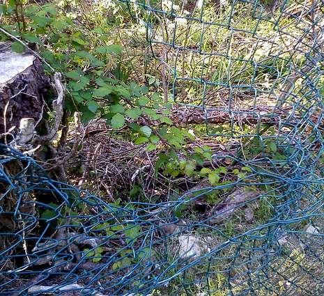 La valla exterior del albergue quedó destrozada por los jabalíes.