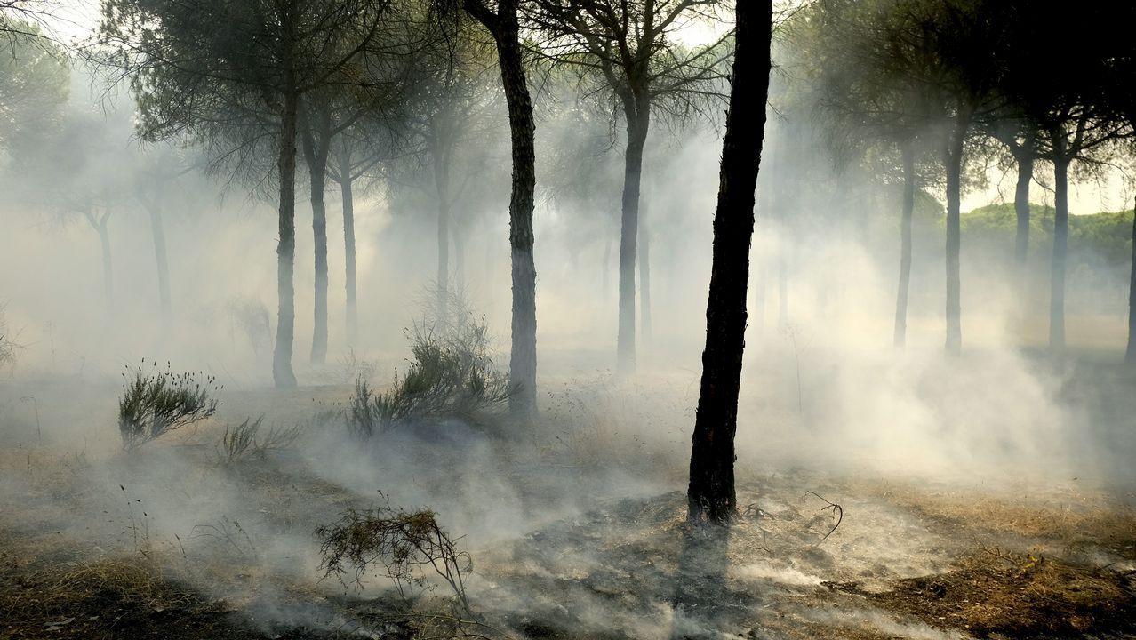Bomberos trabajan en las labores de extinción