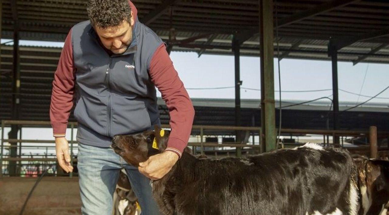 Las vacas llegaron procedentes de la unidad de leche de Gayoso Castro