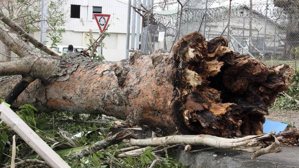 Grandes árboles arrancados de cuajo.