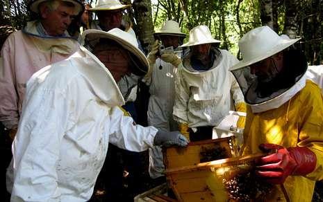 El profesor de Fonteboa Xosé Pintor (izquierda) explica el estado de uno de los cuadros de una colmena .