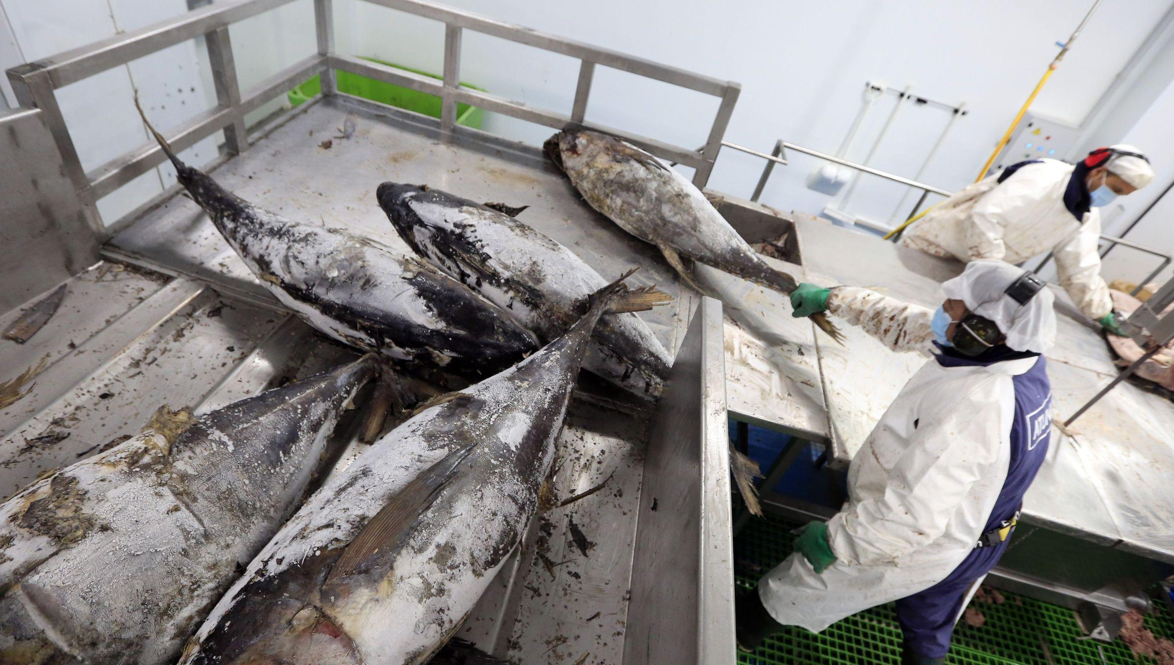 Atunlo, la búsqueda del liderazgo europeo en atún elaborado natural