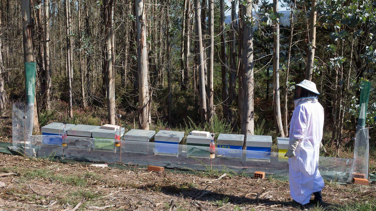 La apicultora Aitziber Escobal, junto a colmenas que ya tienen al lado la red en la que quedan atrapadas las velutinas
