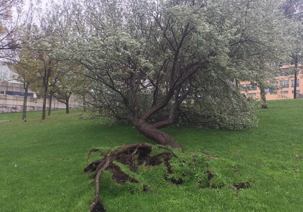 Árbol arrancado por el viento en el parque de San Diego