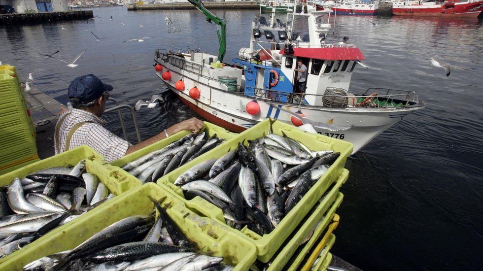 Imagen de archivo de descarga de pesca de caballa y sardina en O Berbés