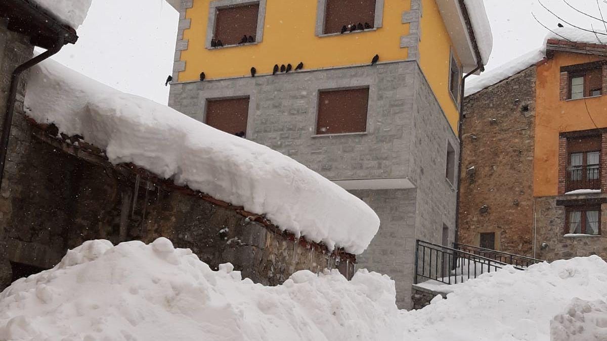 Los pájaros se refugian en las casas ante las nevadas