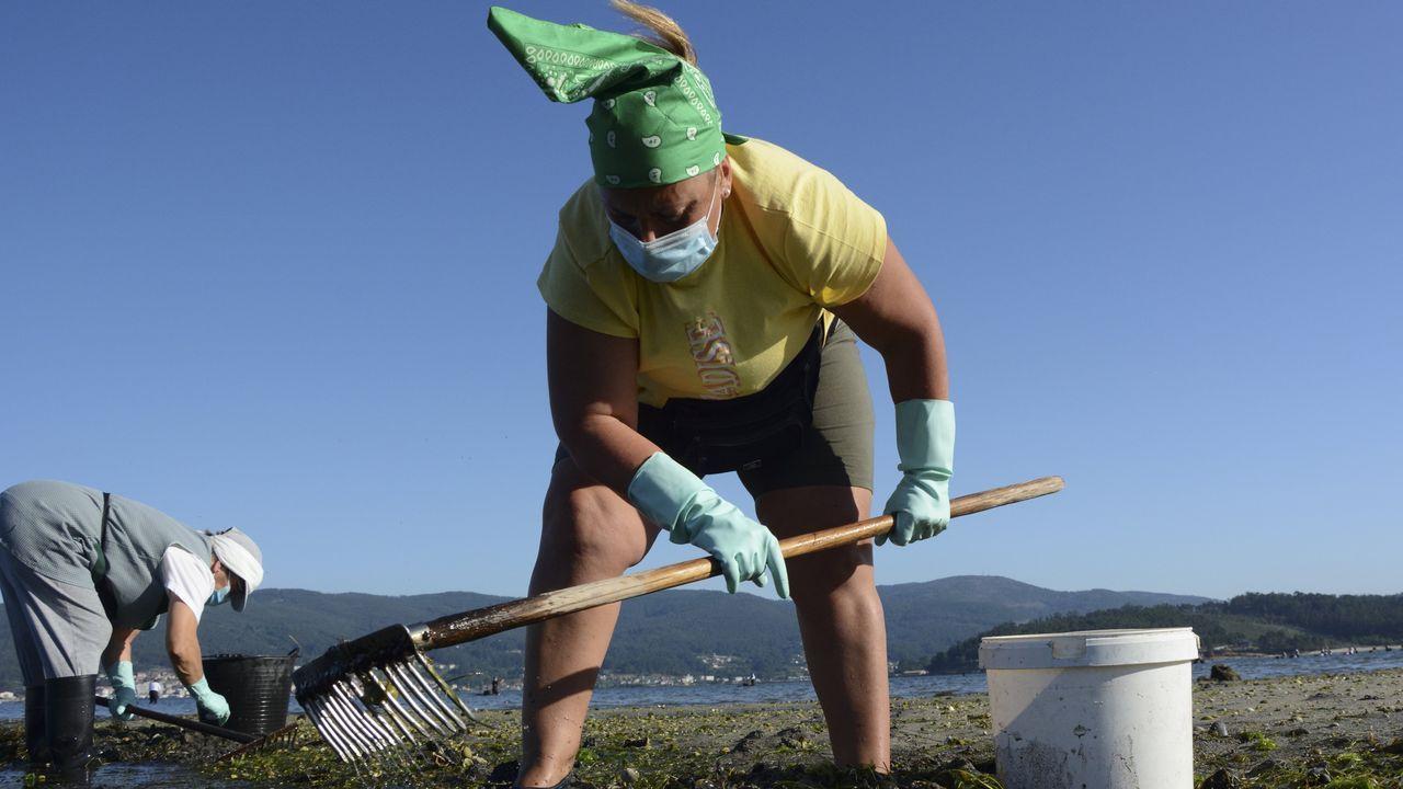 Parte de los 3.481mariscadores de a pie de recursos no especificos, faenando el pasado 20 de julio en el banco de Os Praceres, en Pontevedra