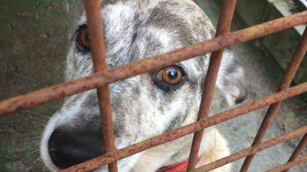 Uno de los perros del albergue de Mieres