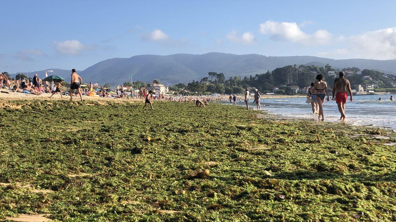 El gran manto, que según los expertos es sinónimo de aguas limpias, ocupa más de un kilómetro del arenal en pleno mes de agosto