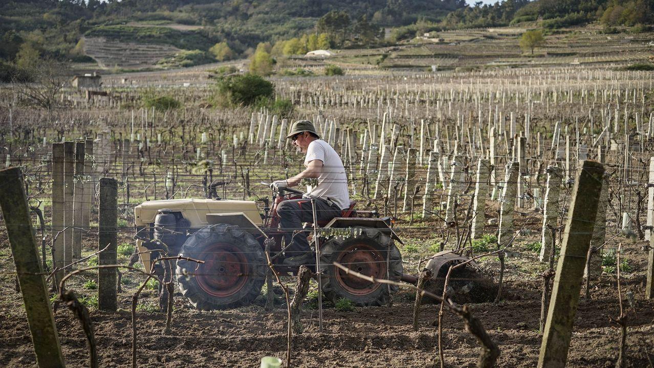 ÁLBUM: Hoteles de Lugo que servirán como alojamiento para distintos colectivos.Laura Lorenzo, en sus viñas de O Bibei, durante el rodaje del documental