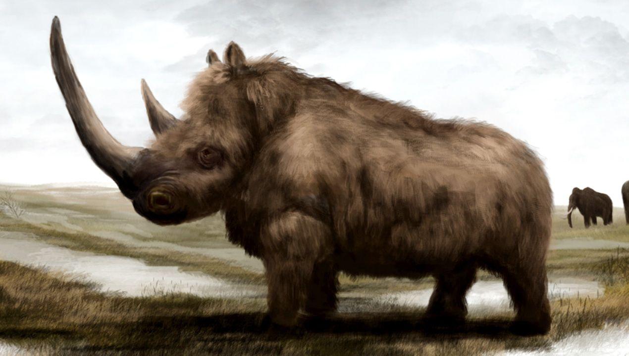 Galería de gárgolas de la Catedral de Oviedo.Dibujo de un rinoceronte lanudo, del que también se han encontrado huesos en la cueva de Las Caldas, en el municipio de Oviedo