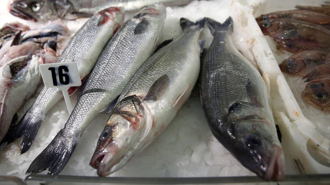 salmón, pescador, campanu, pesca.Lubina o robalo en castellano, robaliza en gallego, un pescado fino muy apreciado cuya talla mínima cambiará para los pescadores deportivos