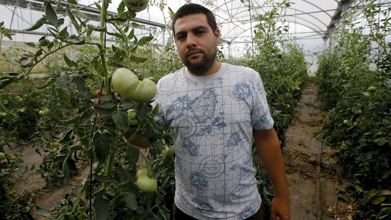Aitor en medio de los tomates que cultivan en su invernadero