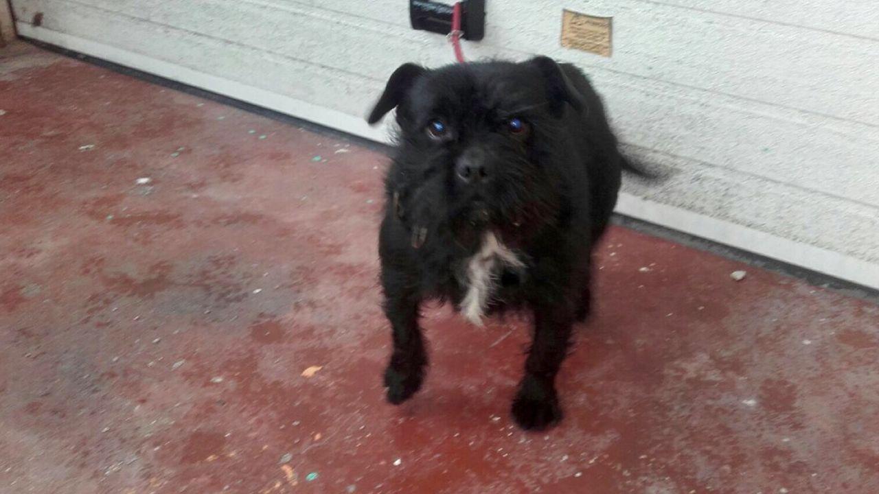 Perro abandonado en Oviedo.Campaña contra el maltrato animal