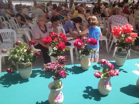 ...Concurso de rosas de Mos