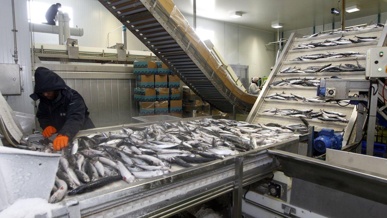 Pescados Rubén, de Foz, en A Mariña, en una imagen de archivo