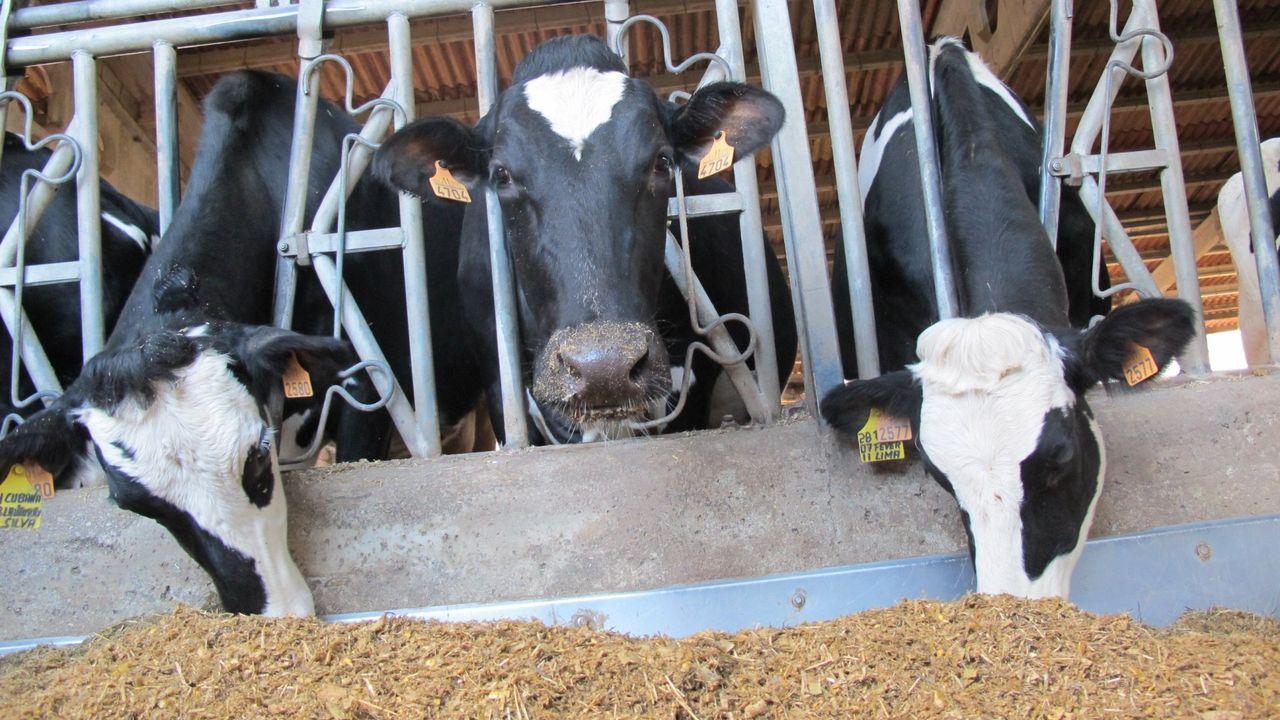 Veiga cre que o sector lácteo galego soubo adaptarse ben a unha produción con baixo custo