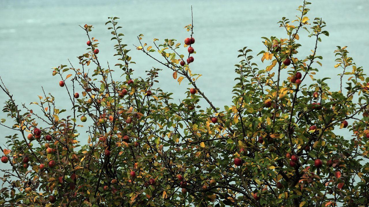 L.El Concello de Guitiriz quiere animar a los escolares a comer fruta regularmente