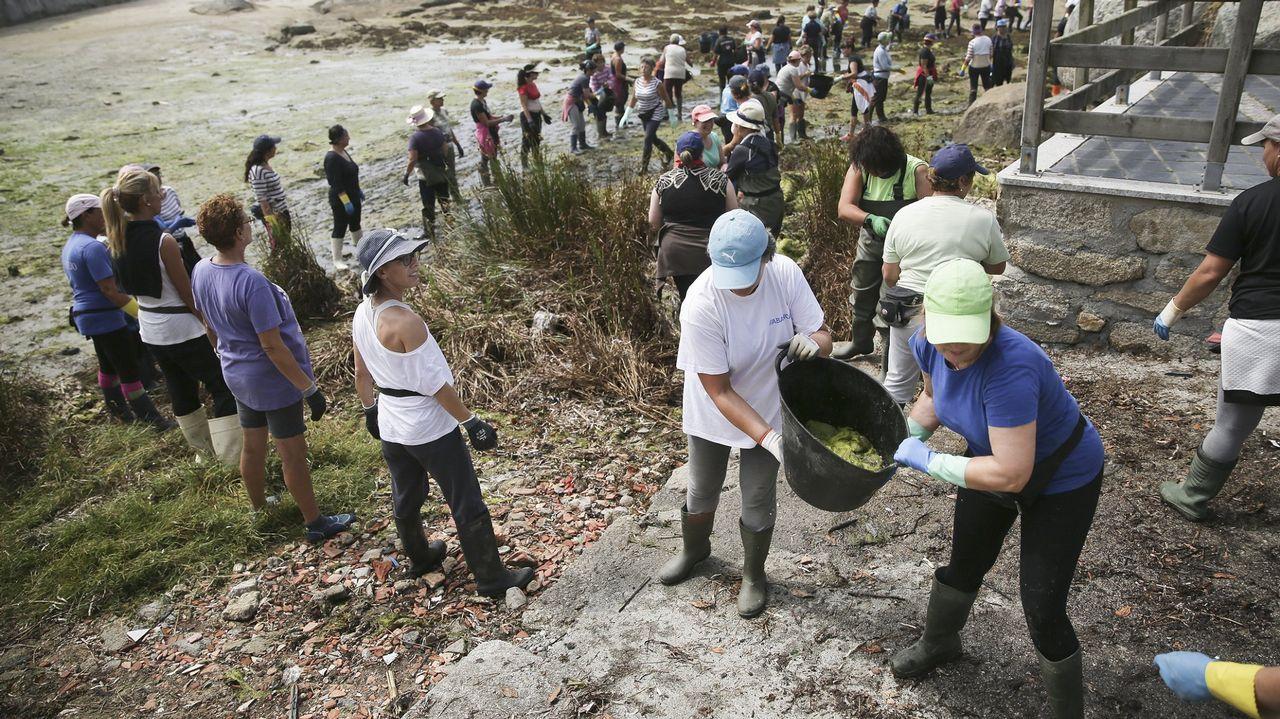 Las mariscadoras de A Illa forman cadenas humanas para retirar las algas de las playas