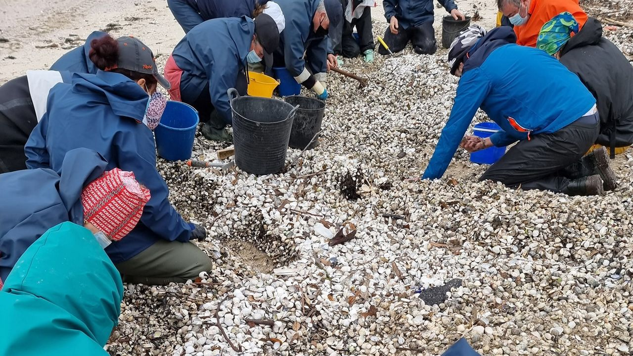 Recogida de marisco en Barraña