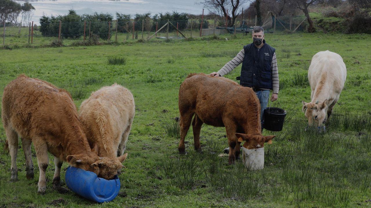 Algunos de los múltiples encantos de la comarca, dignos de visitar.Miguel López, ganadero de Xove de 34 años, que ha sufrido varios ataques del lobo