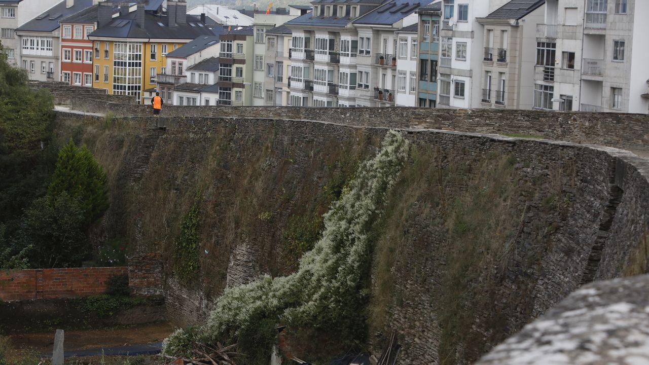 La Muralla de Lugo necesita un afeitado.Tramo de la ronda comprendido entre las puertas de Campo Castelo y de San Pedro