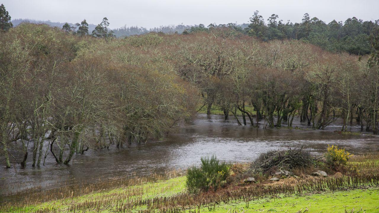 El río Anllons desbordado a su paso por Coristanco