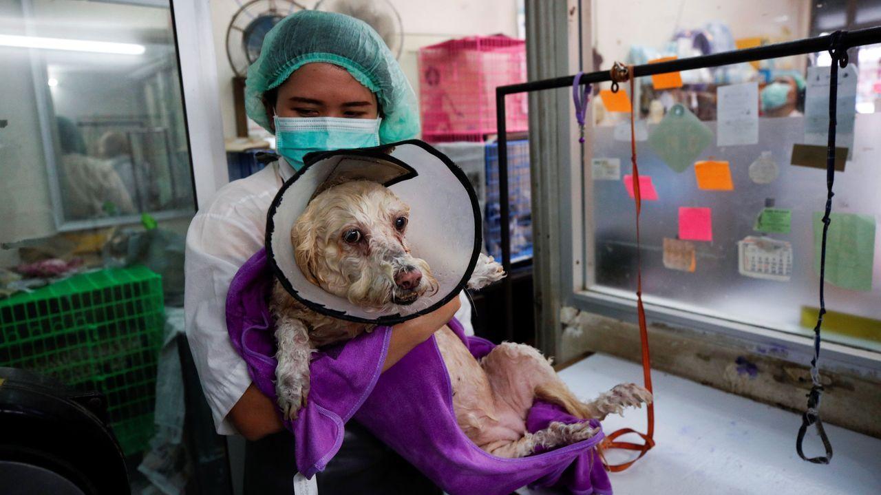El gobierno tailandés ha levantado algunas restricciones permitiendo, por ejemplo, abrir las peluquerías caninas