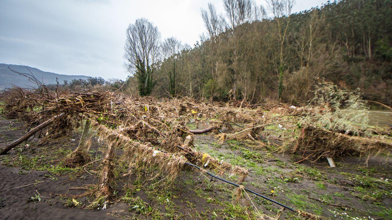 Así quedaron los terrenos de cultivo del kiwi en el Bajo Nalón por el temporal de lluvia.Una imagen del accidente que ha afectado a las oficinas del Sespa en Oviedo