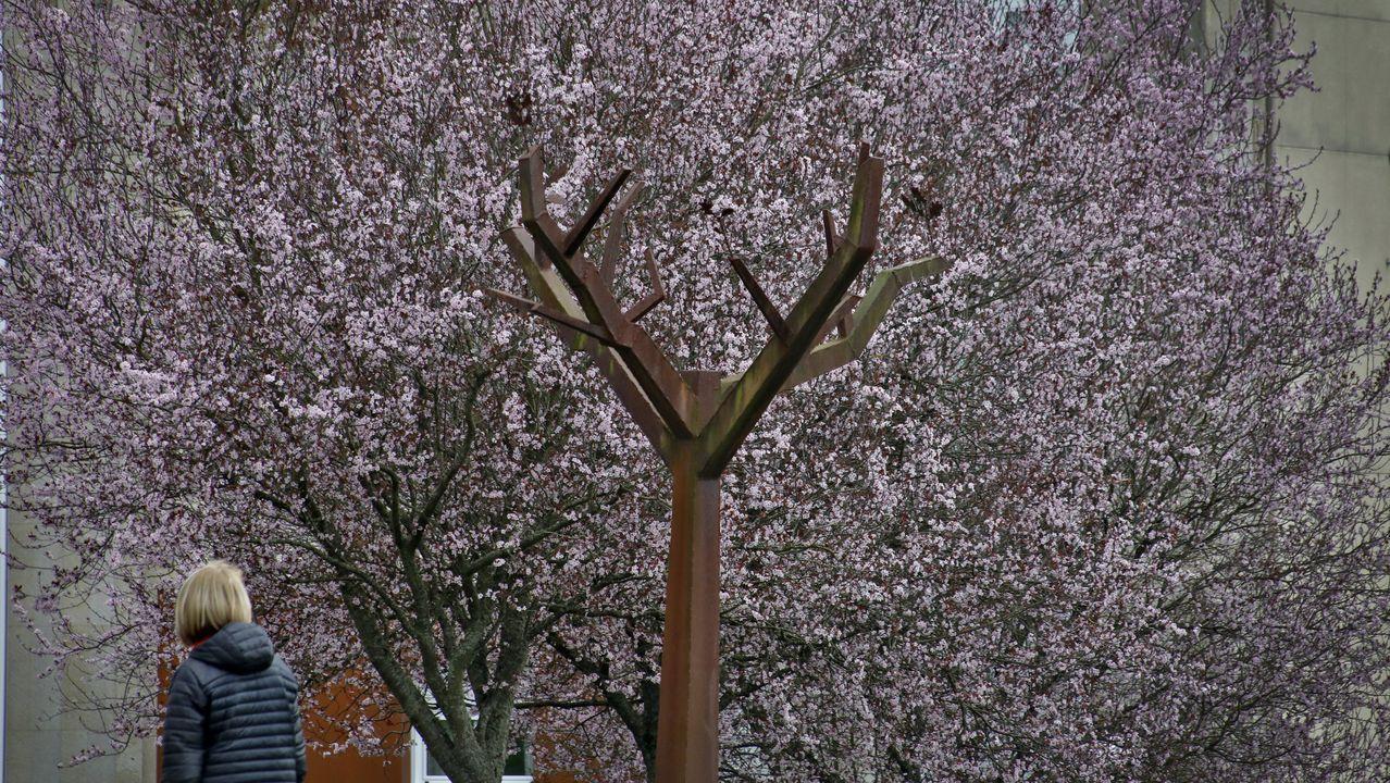 Cerezos japoneses junto a los árboles de hierro de la Ronda de Fingoi